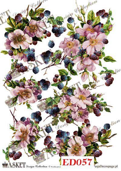 różowe kwiaty z jeżynami