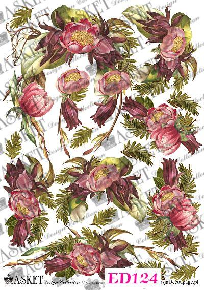 różowe kwiaty z liśćmi