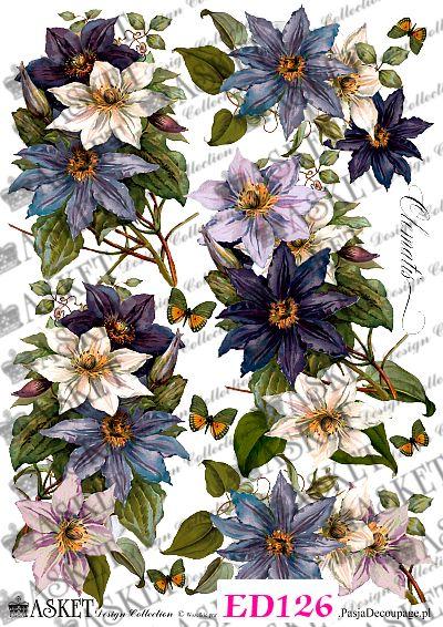 duże niebieskie kwiaty