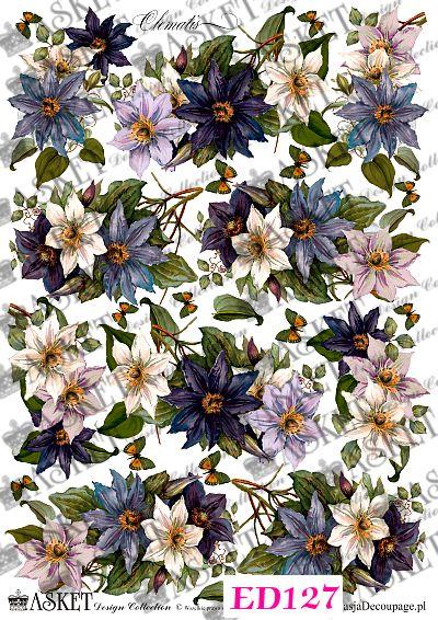 niebiesko - białe kwiaty