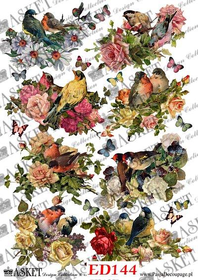 Ptaki w różach