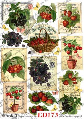 gałązki z owocami, kosz owocow