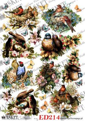 Kolorowy papier z ptakami