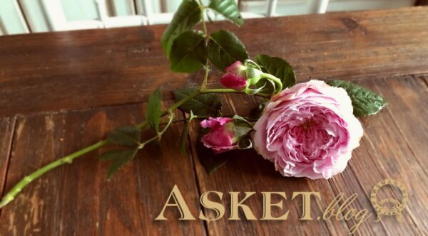 angielskie róże motywy decoupage
