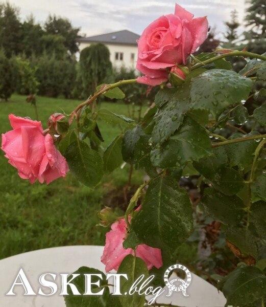 ogród Asket